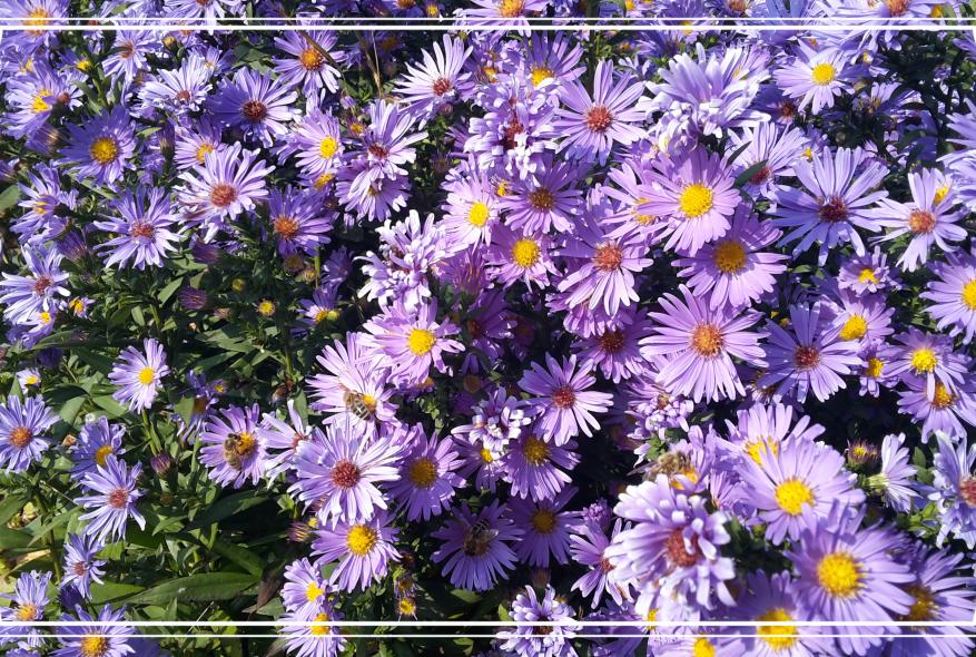 """Blütenduft und Bienensummen ~ """"Warum ich den Frühling liebe"""""""