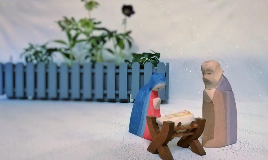 24. Adventskalendertürchen *** (Weihnachten mit der Christrose vom Bamberger Staudengarten plus Gewinnspiel)